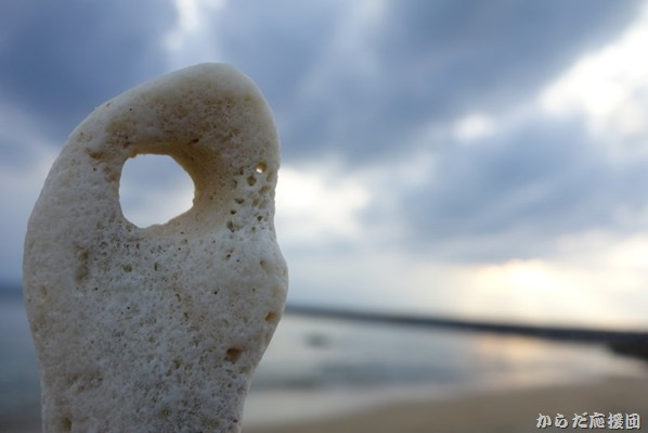 冬の沖縄本島ヤンバル紀行