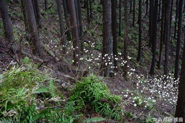 タコチバ山の小さな花達
