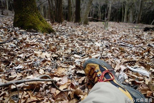 タコチバ山のフワフワ腐葉土