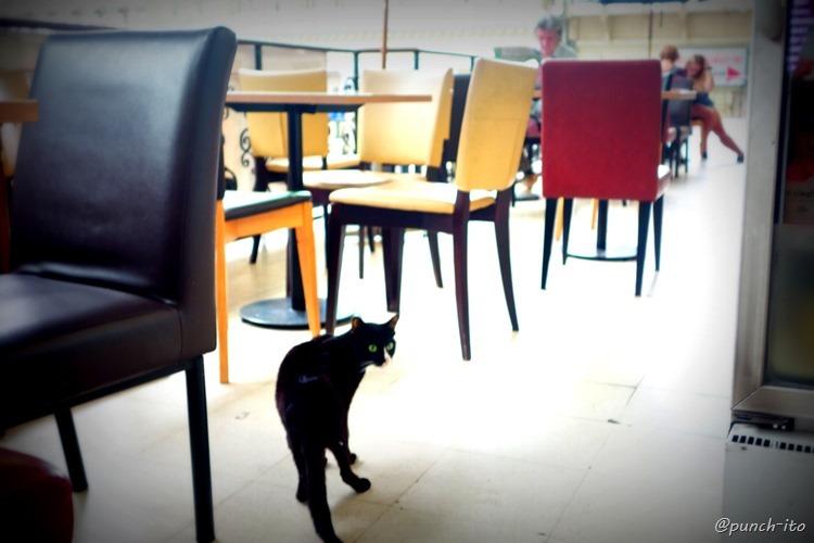 フアランポーン駅のカフェにいる猫