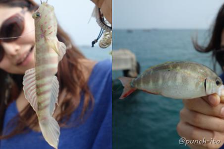ナバーン桟橋で釣れた魚