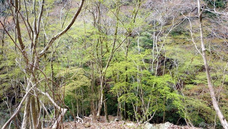 表丹沢県民の森から鍋割山へ
