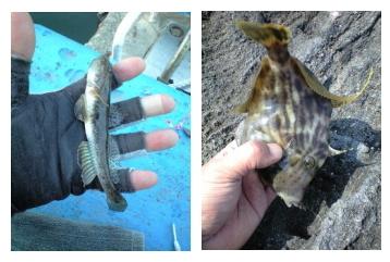 釣りとトリガーポイントと私-亀山