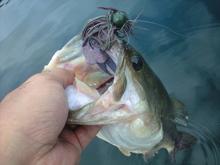 釣りとトリガーポイントと私-ラージマウス