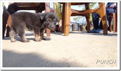 ベグナスの子犬